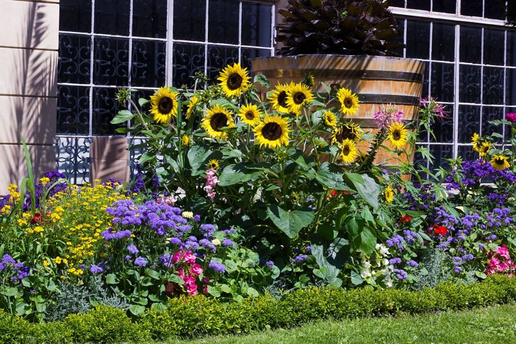 Flower bed with different flowers in summer garden