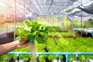DIY Home Hydroponic Gardening Ideas