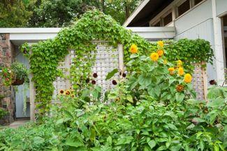DIY Trellis Ideas for Your Garden