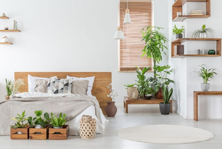 bedroom nature living plants