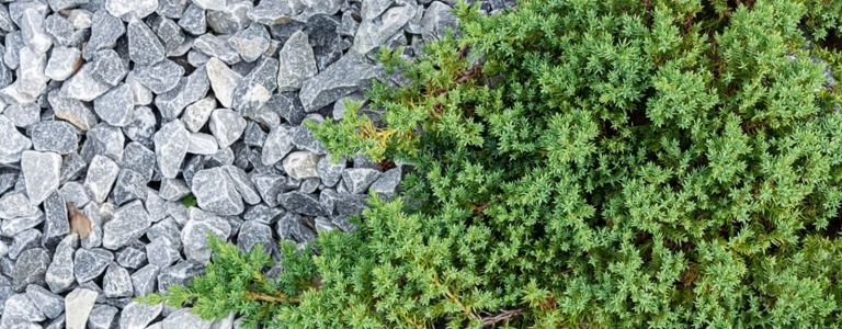 Low-Maintenance Ground Covering Plants for Your Yard
