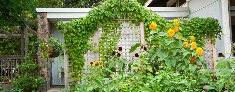 DIY Trellis Ideas for Your Garden