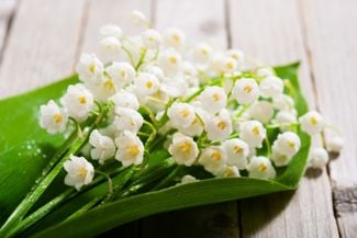 Lily of the Valley: A Guide to the Beautiful and Toxic Plant