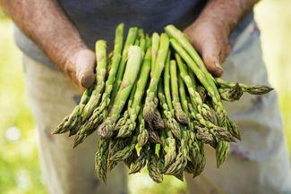 Dos and Don'ts When Starting An Asparagus Garden