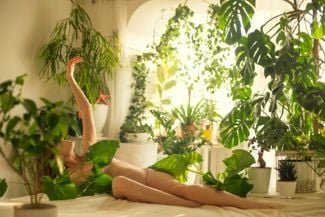Plants That Will Flourish in Your Bedroom