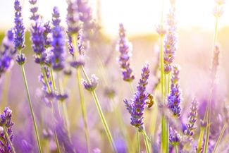 Purple Flowers That Create Eye-Popping Appeal