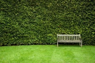 Beautiful Trees to Add Privacy to Your Backyard