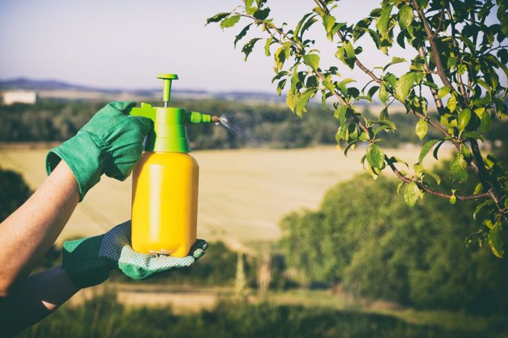 organic fungicide homemade solution apply
