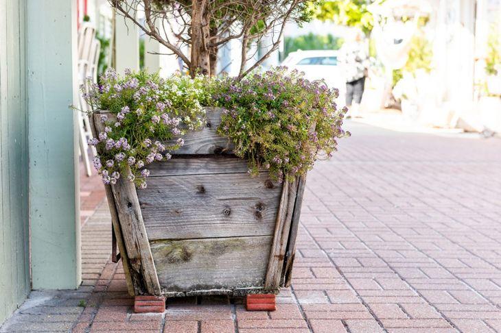 ornamental nursery cascade container