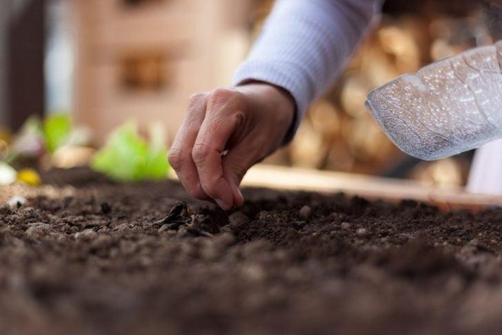 seed germinates propagate cuttings plant