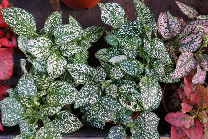 humidity powdery mildew watering plant
