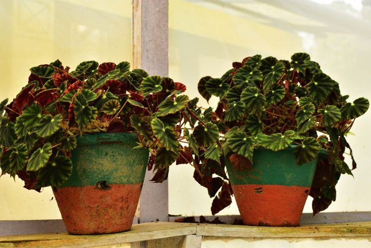 perennial protect patio containers