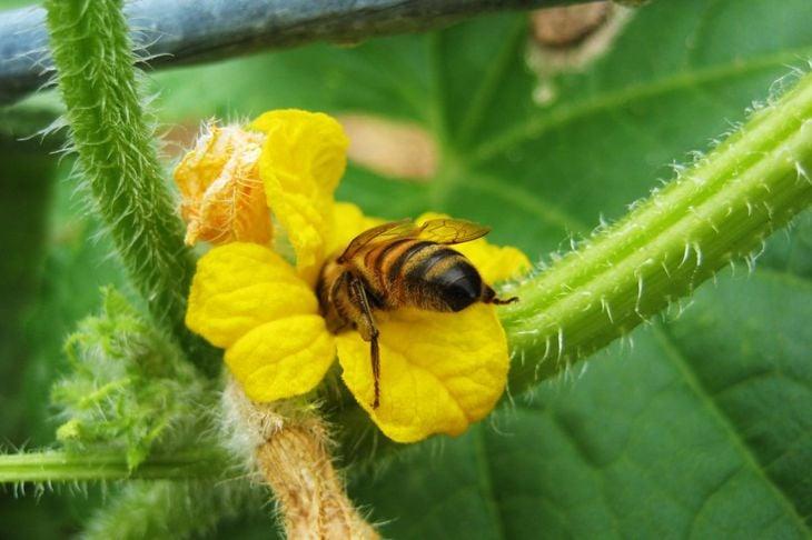 blooms fruit pollinators bee