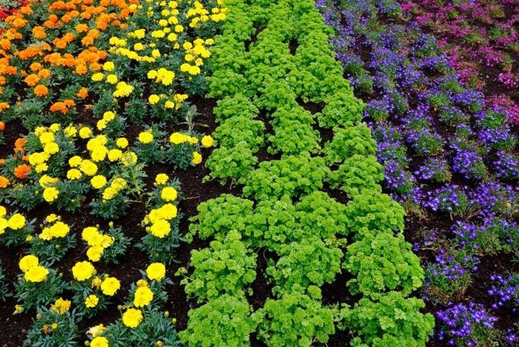 Rainbow gardens are vibrant