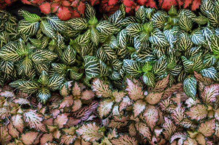 houseplants terrarium grow clustered