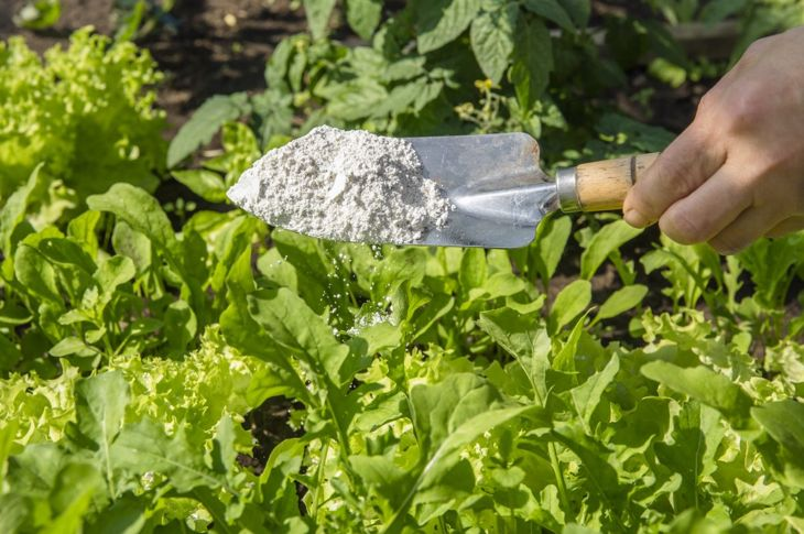 diatomaceous earth food-grade