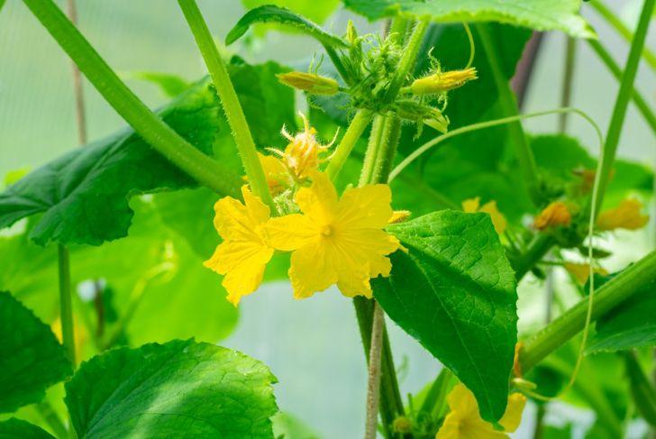 waterings male female flowers