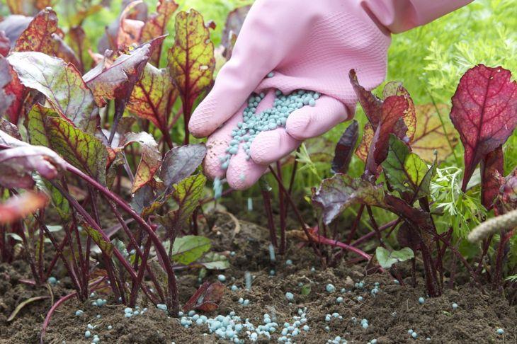 monthly feedings nitrogen fertilizer