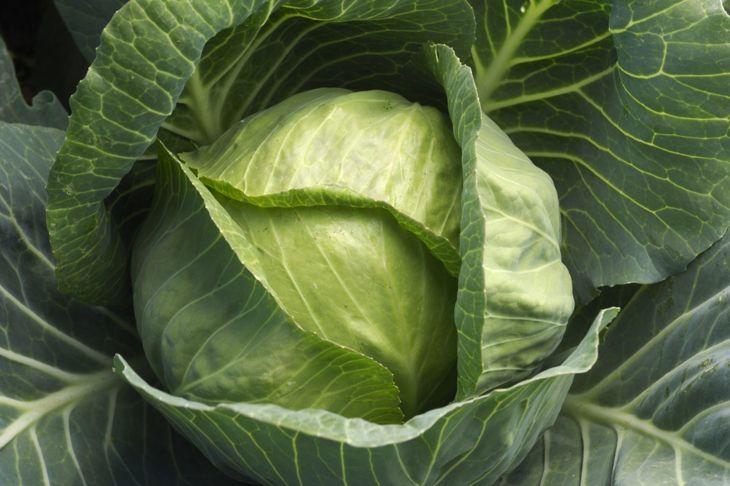 recipe stale bread cabbage leaves