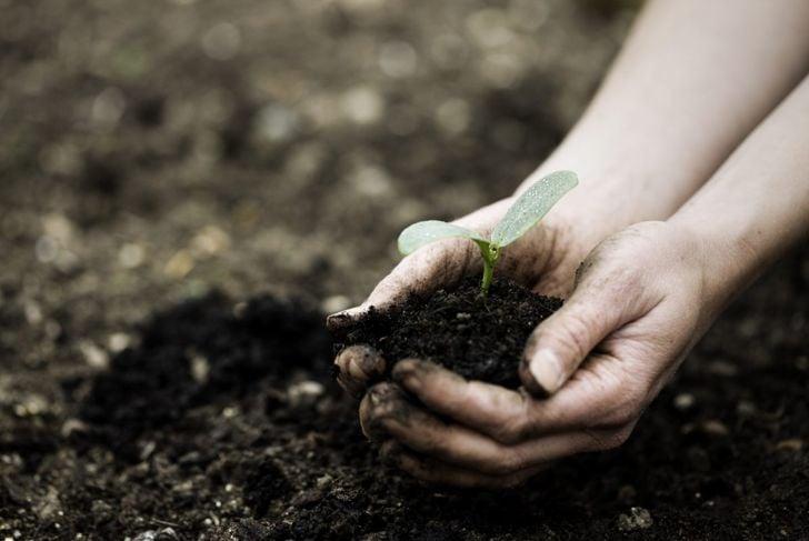 seedling seeds planting