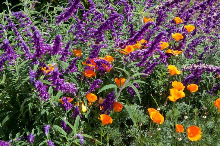Grow flowerbeds in contrasting colors