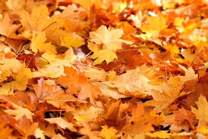 winter months survive fallen leaves
