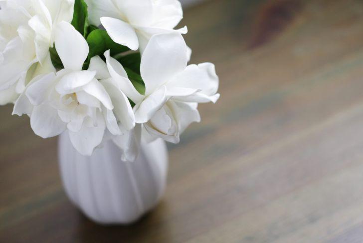 gardenia jasminoides acidic fertilizer