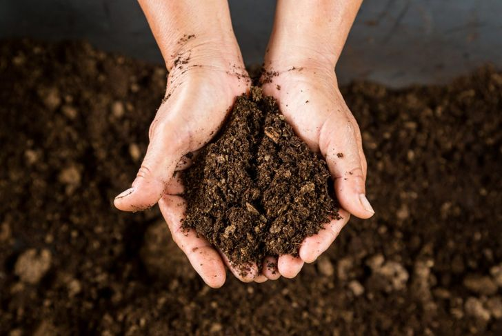 hands holding soil peat moss