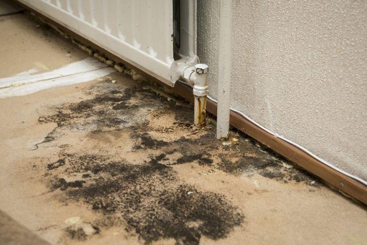 reduce humidity moist mold