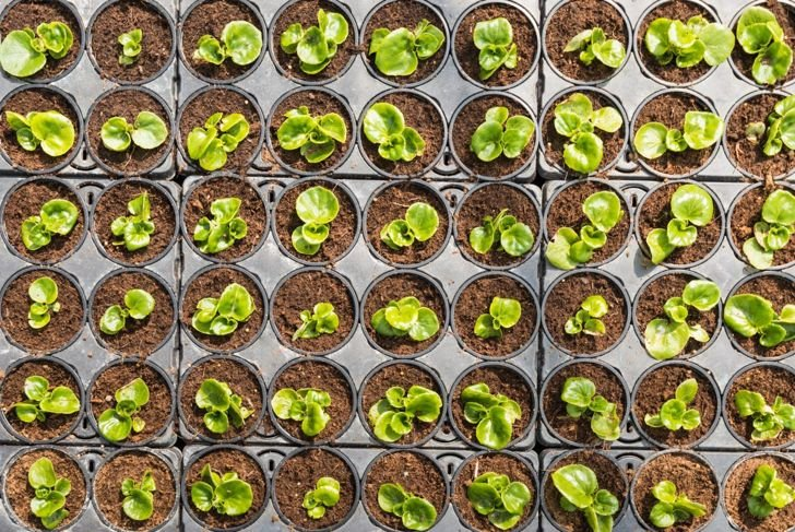 propagating leaf stalk new plants