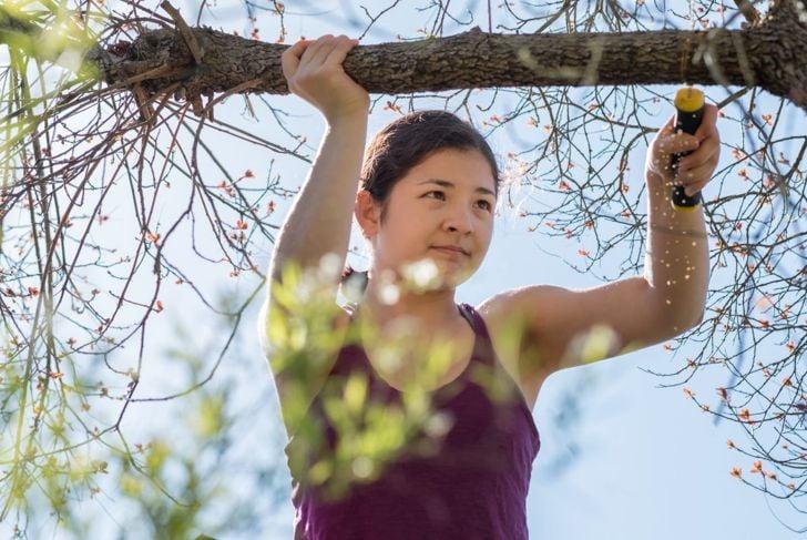 block sunlight trim shrubs limbs