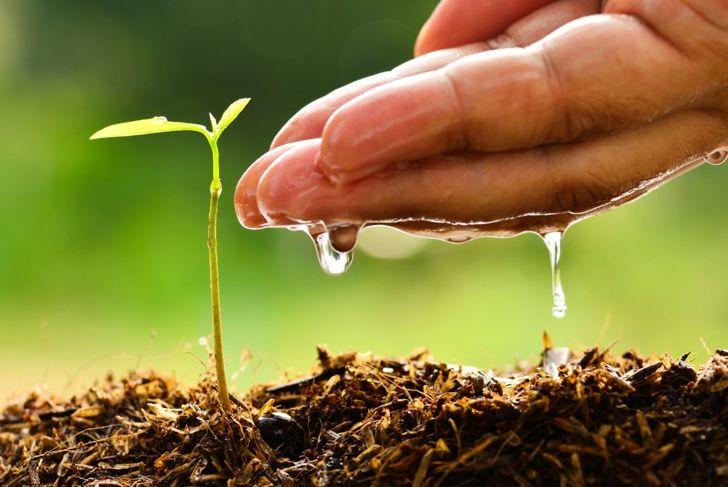sapling growing pot water