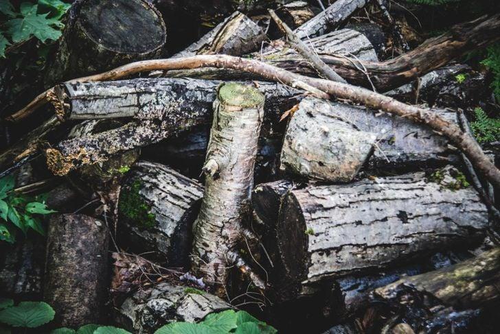 Hügelkultur uses garden debris