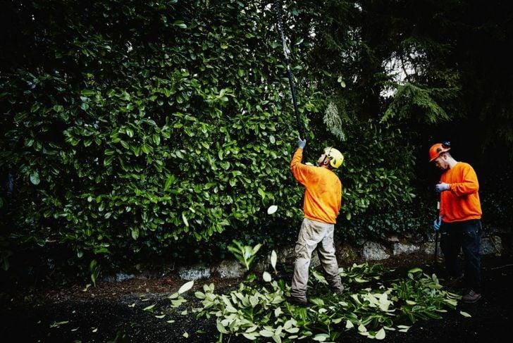 trim trees hedges leaf litter