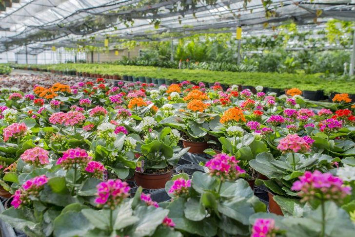 short day plants blooms nursery