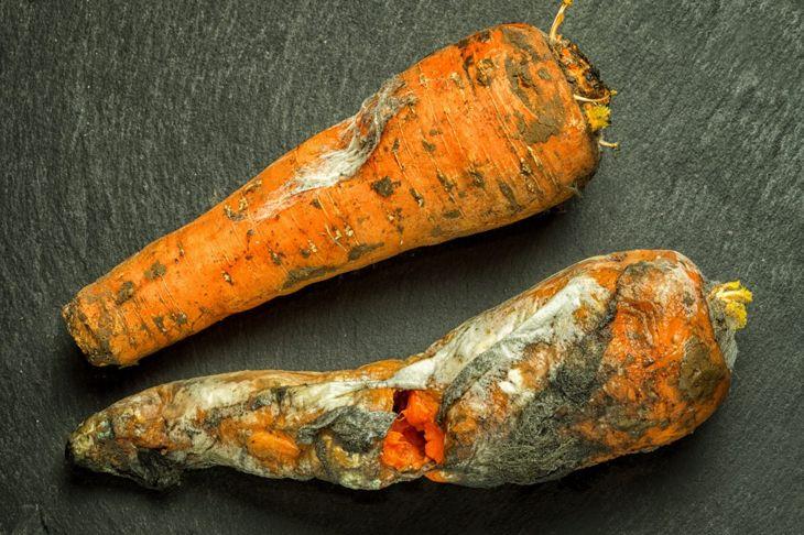 Diseased carrots