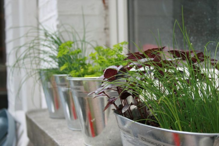 Herbs bloom in many colors.