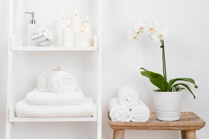 orchids moisture-loving bathroom plant