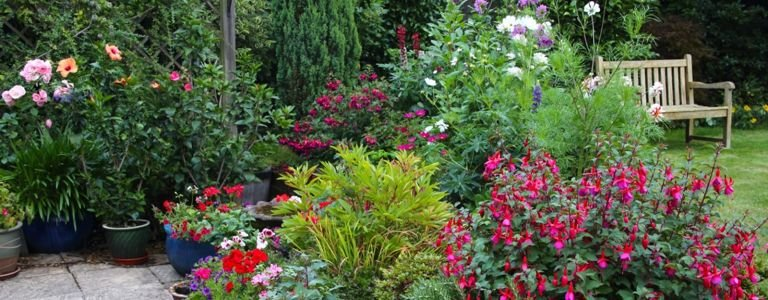 Flowering Shrubs For Every Climate