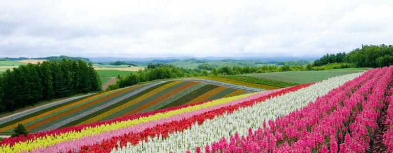 Grow a Spectacular Rainbow Garden