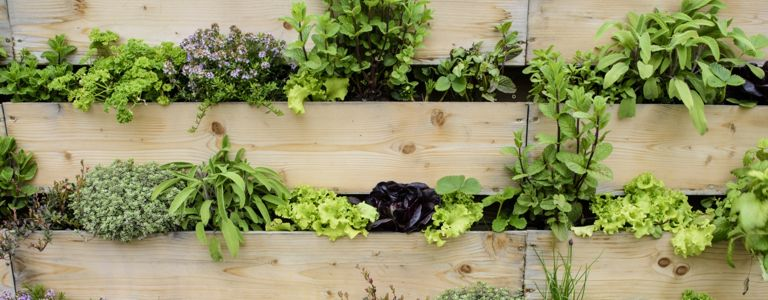 Take Your Green Thumb to New Heights With Vertical Gardening