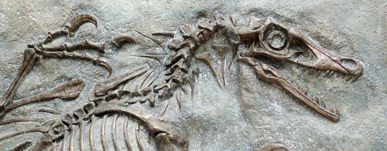 What Were Velociraptors?