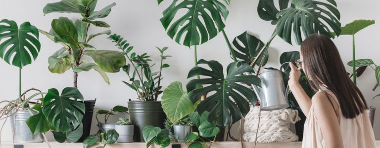 Transform Your Home with These Exotic Tropical Houseplants