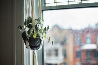 Spruce Up Your Space with Hanging Indoor Plants