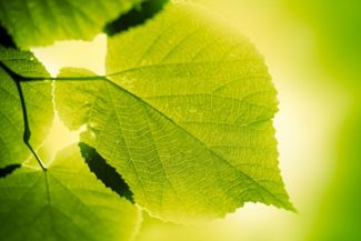 How Photosynthesis Affects Your Plants