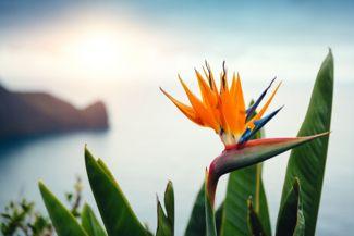 How To Grow the Elegant, Exotic Bird-of-Paradise