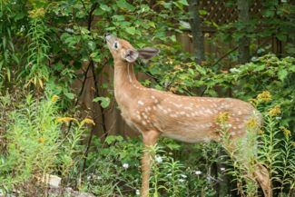 Create a Beautiful Deer-Resistant Garden Using These Plants