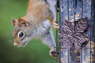 Outsmart Squirrels With These Crafty Bird Feeders