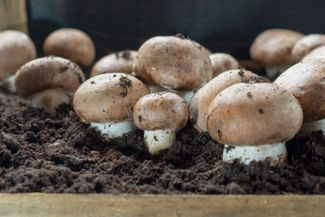 Having Fun with Fungus: A Guide to Growing Mushrooms