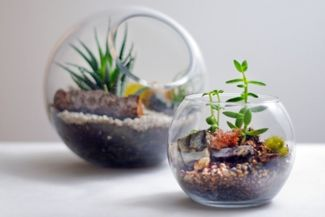 How to Build a Terrarium in a Few Simple Steps